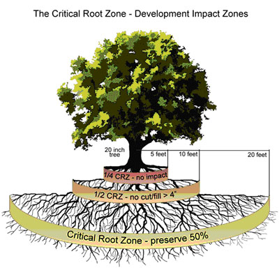 Tree-Critical Root Zones