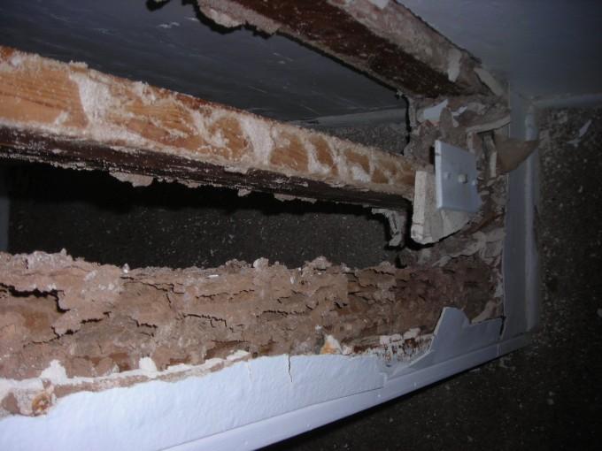 Termites Denver 1